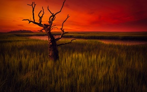 Picture the sky, landscape, tree, the evening