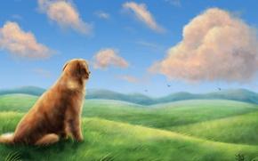 Picture field, grass, clouds, birds, the wind, hills, dog, art