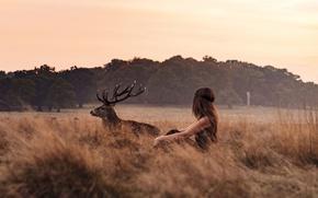 Picture girl, twilight, field, sunset, dusk, countryside, deer, wildlife