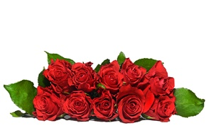 Picture flowers, bouquet, red roses