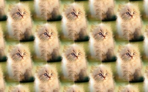 Picture background, kitty, pussy, texture units