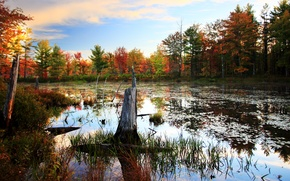 Picture autumn, forest, trees, swamp, Nature, forest, trees, nature, autumn, swamp