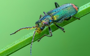 Picture macro, background, beetle