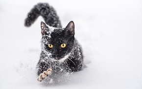 Picture winter, cat, snow, paw, claws