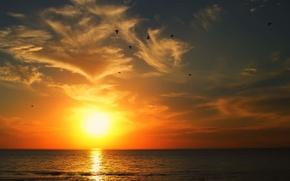 Picture sea, clouds, sunrise, seagulls, horizon