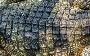 Picture leather, crocodile, texture, leather, crocodile, skin