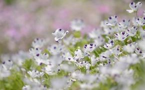 Picture summer, flowers, nature, glade, petals, blur, purple, len, white