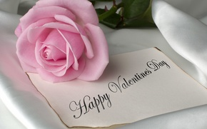 Picture Pink, Rose, with, Background, Happy Valentines Day