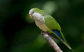 Picture branch, wildlife, parrot, eyes