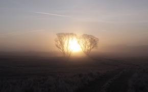 Wallpaper sunrise, fog, tree, the sun