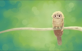 Picture green, owl, branch