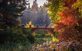 Picture beauty, Botanical Garden, Park, bridge, Berlin, Germany, trees, the bushes, pond, autumn, gardens