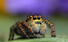 Picture macro, background, spider, jumper