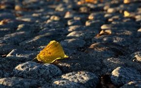 Picture autumn, Leaf, bridge, cobblestone