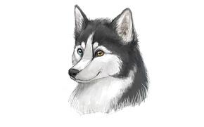 Picture face, dog, minimalism, husky, dog, husky