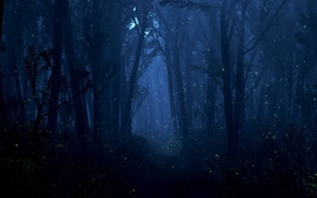Wallpaper lights, light, night, fireflies, trees, forest