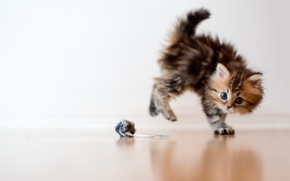 Wallpaper cat, macro, kitty, fright, toy, ball, Daisy, Ben Torode
