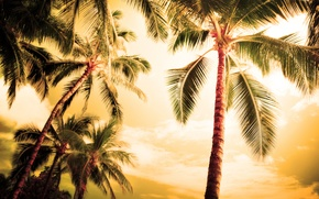 Picture sea, summer, the sky, leaves, Islands, trees, nature, Palma, palm trees, tree, the ocean, romance, …