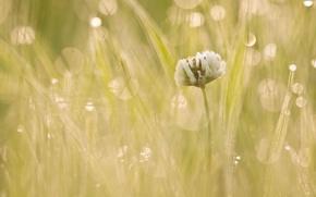 Picture flower, light, morning