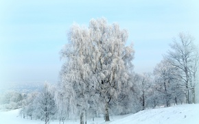 Picture winter, frost, snow, trees