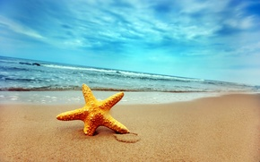 Wallpaper sand, wave, shore, star, 155