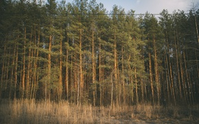 Picture forest, the sky, trees, nature, earth, pine, pasado