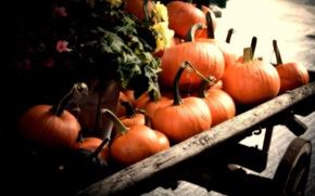 Wallpaper Pumpkins, autumn, orange, fall, cart