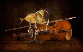 Picture violin, fish, art, bow
