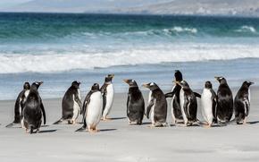 Wallpaper sea, pack, coast, penguins