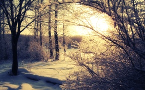 Picture winter, forest, the sun