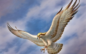 Picture the sky, bird, wings, art, Falcon