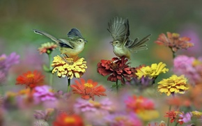 Picture flowers, birds, wings, meadow, tail