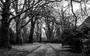 Picture road, trees, branches, nature, black and white, white, black, trees, nature