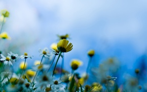 Wallpaper macro, meadow flowers, stem