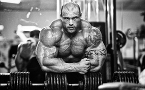 Picture bodybuilder, muscles, morgan aste, big rock