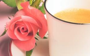 Picture flower, rose, mug