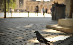 Picture people, bird, tile, dove, area, bokeh