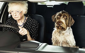 Picture Dog, Humor, Machine, Eyes, Grandma, Dog, Machine, Eyes, Funny, Humor, Bulged, Grandmother, Puffed, The trick