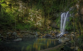 Picture forest, river, waterfall, Australia, Australia, Queensland, QLD, Curtis Falls, National Park Tambourine, Tamborine National Park
