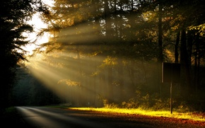 Picture road, forest, the sun, rays, trees, nature, dawn, morning