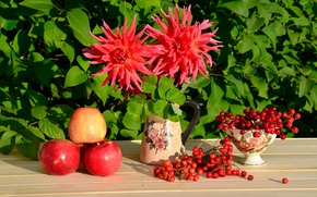 Picture red, Apple, still life, Kalina, dahlias