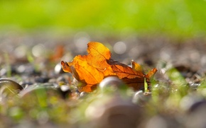 Wallpaper autumn, leaves, macro, yellow, background, widescreen, Wallpaper, blur, leaf, wallpaper, leaves, yellow, widescreen, background, autumn, ...