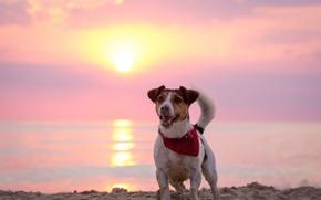 Picture each, dawn, dog