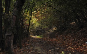 Picture autumn, leaves, orange, trunks, stone, trail, Forest, green, Kara, trunk.