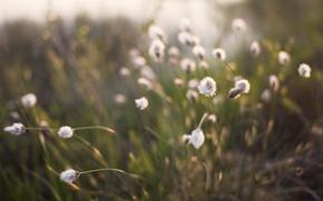 Wallpaper grass, plants, focus, 152