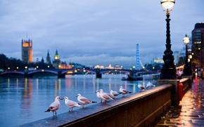 Wallpaper light, the city, river, lamp, street, England, seagulls, London, bokeh