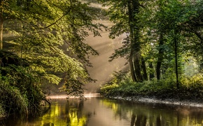 Picture forest, trees, river, Netherlands, reserve, Nederland, Bekendelle, Winterswijk, Winterswijk