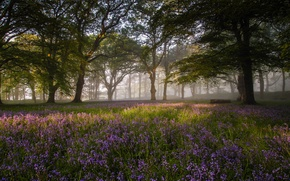 Picture forest, flowers, nature, morning