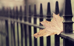 Picture cold, sadness, autumn, leaves, loneliness, mood, sadness, longing, fences, nostalgia, leaf wallpapers, autumn wallpapers, leaves …
