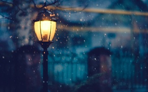 Picture winter, light, snow, trees, night, the fence, home, lighting, lantern